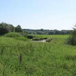 Blick in die Saarner Aue, die ein Teil des Naturschutzgebiets Saarn-Mendener Ruhraue ist