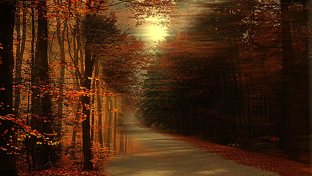 the avenue of autumn