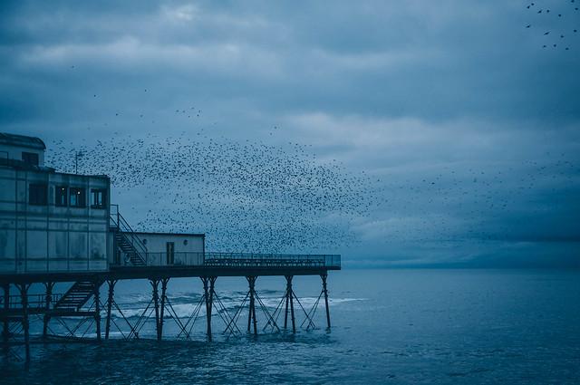 When the birds leave Aberystwyth