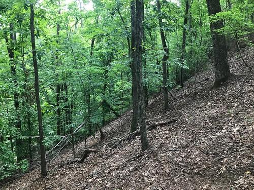 trees strata geology soils slope incline forest sc carolina calhoun woods protected preserve ftmotte congaree árbol árboles usc