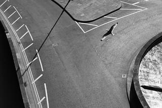 Lone Seabird | by steve voidstar