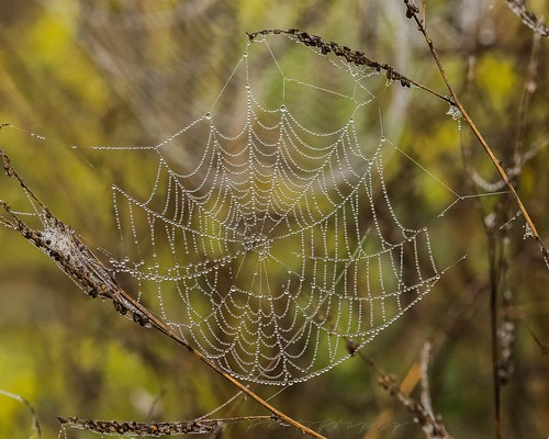 Spiders Web | by kevinhaw335