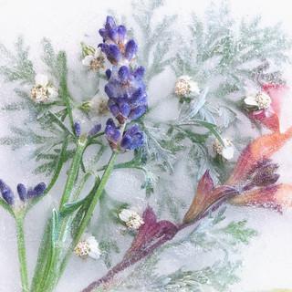 Lavender Ice | by Anne Worner