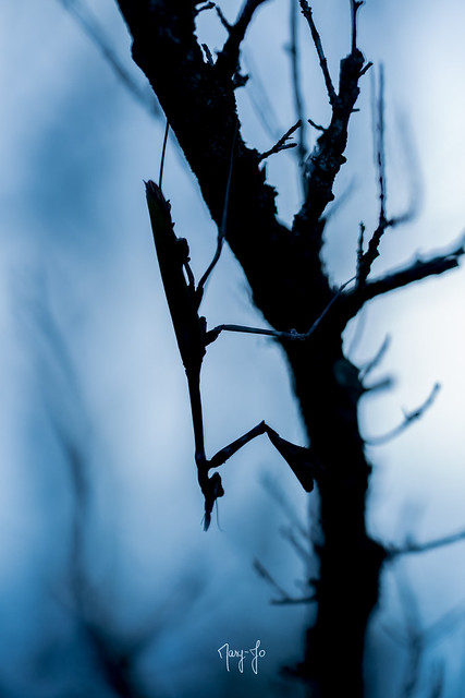 L'empuse au clair-obscur...The empuse chiaroscuro ...