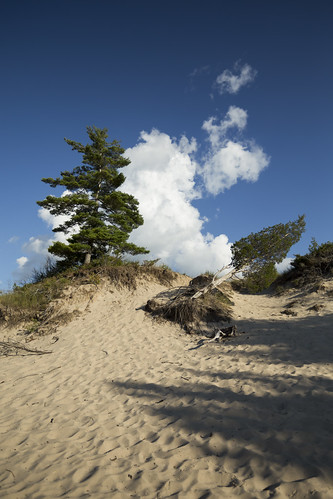 landscape sand beach blue sky cloud pine trees pinery park ontario