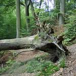 Unaufgeräumter Wald im NSG Oefter Tal