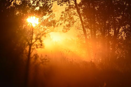 sunrise fog trees silhouette gold morning chisholmcreekpark wichita kansas