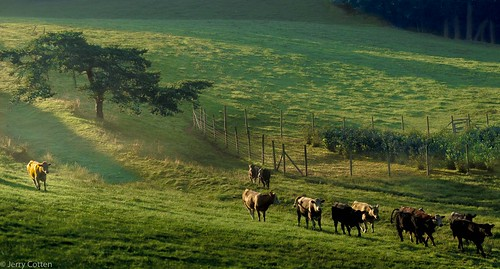 landscapes blueridgeparkway wataugacounty northcarolina blowingrock cattle cows hudsonriverschool