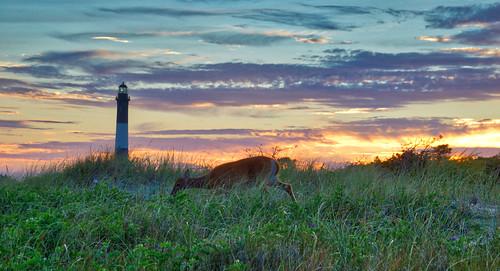 fireislandnationalseashore deer sunset longisland lighthouse 1001nights 1001nightsmagiccity fireisland 1001nightsmagicwindow dusk twilight clouds