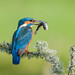 Bird on a stick by Andrew H Wildlife Images