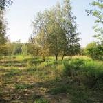 Blick in die Dellbrücker Heide