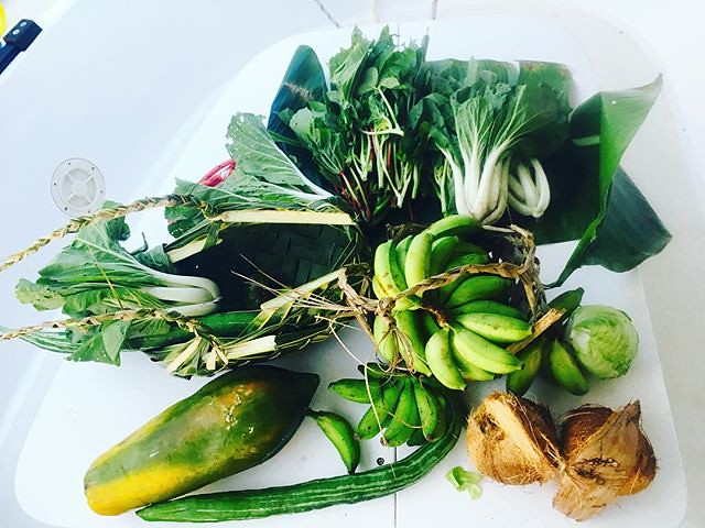 201/365 • Chief Paul of Vuteki delivered all these to us on his outrigger canoe an hour ago 😊• . #paama #gfts #vuteki #village #coconut #homegrown #islandcabbage #bokchoy #snakebeans #boatlife #offgrid #pawpaw #anchorage #vanuatu #learning #sailing