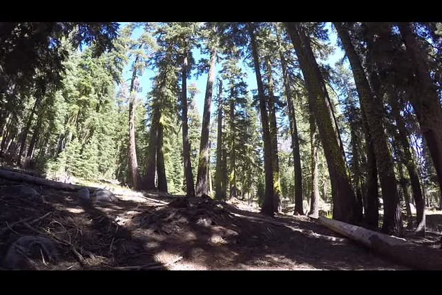 1857 GoPro panorama video of a quiet Pine Forest on the Tahoe-Yosemite Trail