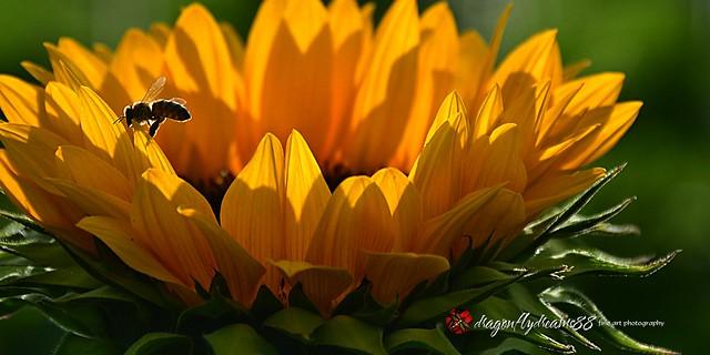 bee happy . . .