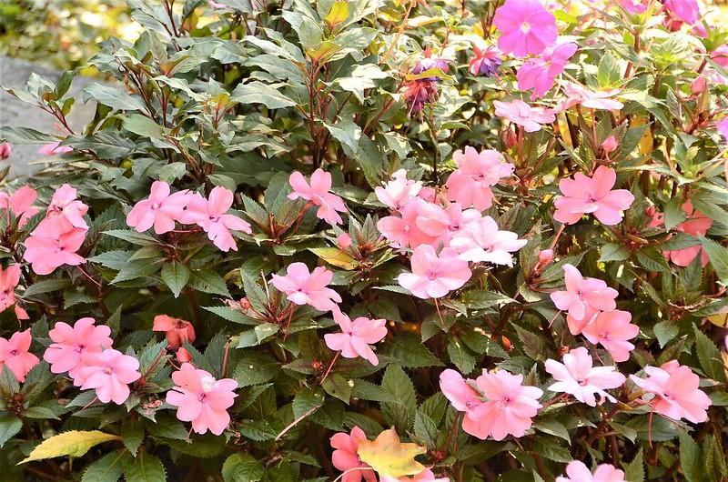 Flowers 15.09 (5)