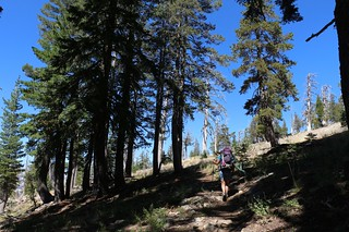 1044 The trees begin to thin as we climb higher on the Tahoe-Yosemite Trail west of Phipps Peak | by _JFR_