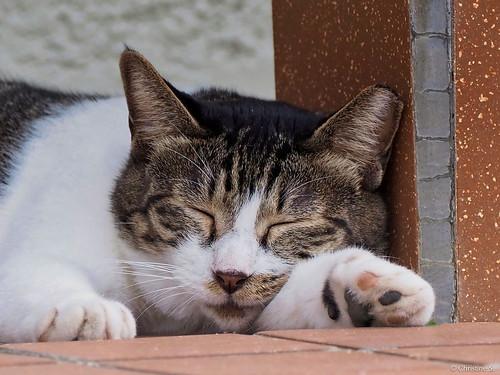 stray cat | by Christine_S.
