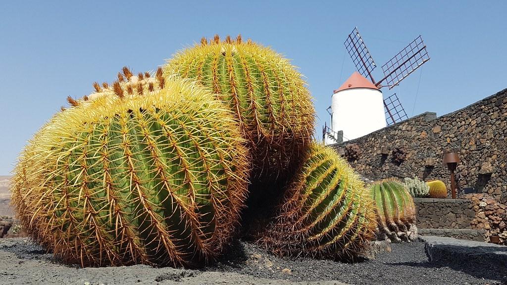 Jardin de Cactus - Lanzarote - 2018-09-13 | Jardin de Cactus… | Flickr