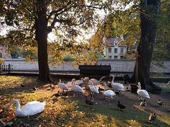 Bruges wildlife