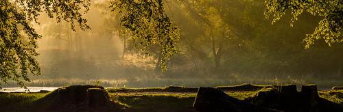 longshawestate nationaltrust sunrise sunlight backlit leaves golden beech rays sunrays