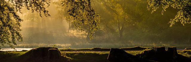 Early Morning, Longshaw Estate
