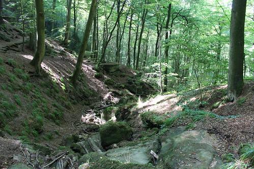 Wald im Müllerthal mit Sandsteinblöcken   by Grüner Nomade