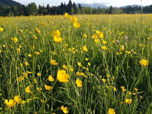 Spring Nature Meadow Field Bavaria © Frühling Wiese Natur Bayern ©