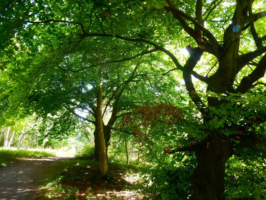 Trees Princes Risborough to Wendover