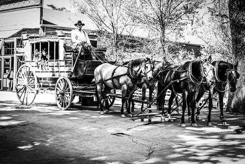 sitting hat d850 livestock landscape candid oldtown street people carriage blackwhite monochrome quiet horse california posing columbia unitedstates us