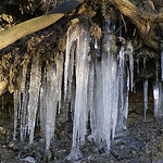 Eiszapfen unter einer Baumwurzel am Ufer des Baldeneysees
