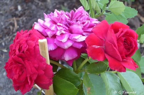Grüße aus meinem Augustgarten