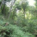 Der Schellenberger Wald im Frühherbst