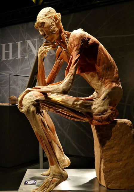 Real Bodies Exhibition