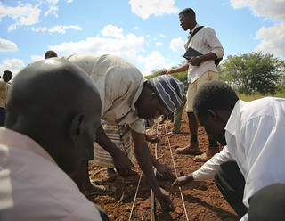 Lisungwi farm, Malawi | by IFPRI