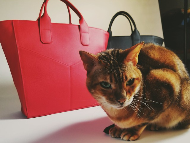 Don't even think about taking my Marcher Studio bag!  Kitty photo bombs the product shoot 😅