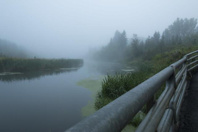 Happy Foggy Friday!