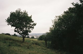 Where Hengrove Brook should start   by knautia