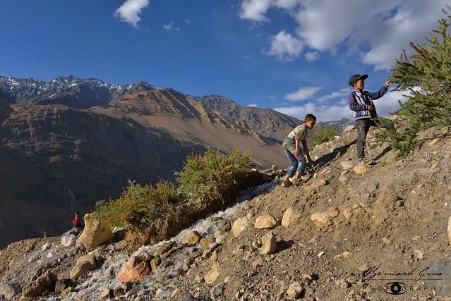 Garçons Wakhi cueillant des baies d'argousier dans la vallée de la Chapursan 05/08/2018 © Bernard Grua