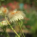 Flower seed &bokeh by madein.w