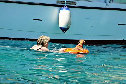 Naapuriveneen koira oli innokkaampi uimari kuin omani. | by helipekkarinen