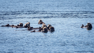 Raft of Otters | by itsmarykate