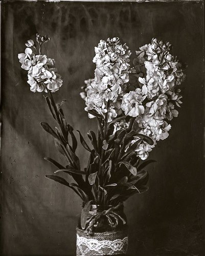 Flowers 2, ambrotype 8x10 | by lagosjaime