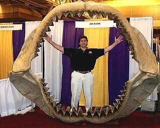 The search for Megalodon