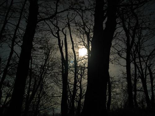trees moon night lune virginia arbres va shenandoahvalley shenandoahcounty