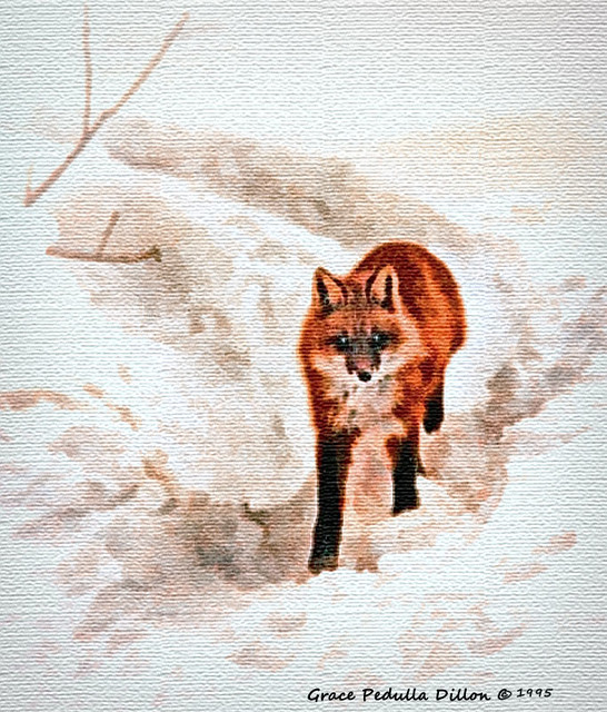 Red Fox in Adirondack Mountains