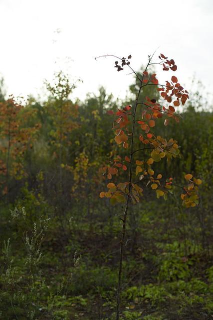 Breathe of Autumn