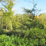 Waldlichtung im NSG Thielenbruch und Thurner Wald