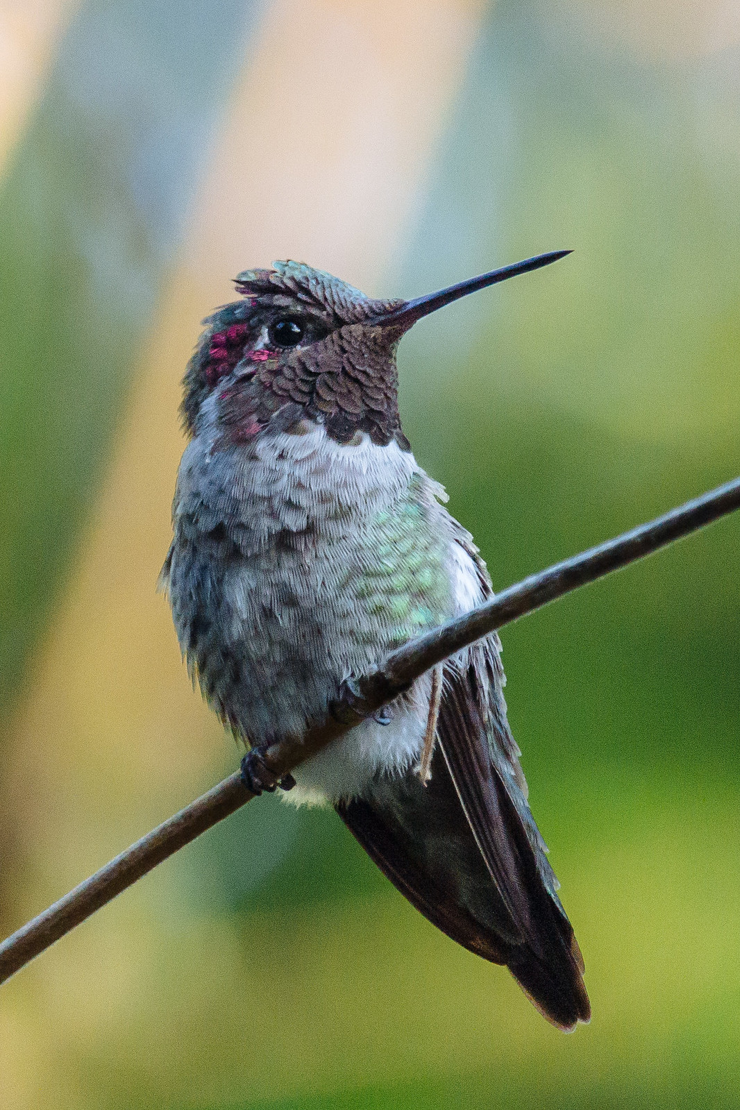 A small hummingbird perched on a thin branch