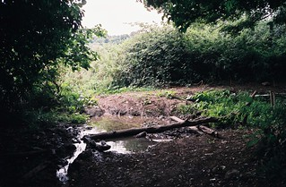 Drought stream, Mannings Wood | by knautia