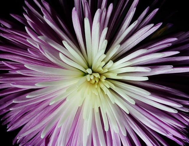 365 - Image 241 - Colour explosion...